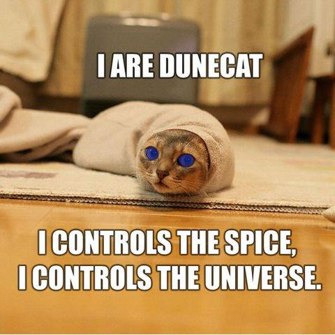 dune-cat.jpg