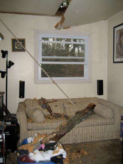 tree-roof-no-bueno.jpg